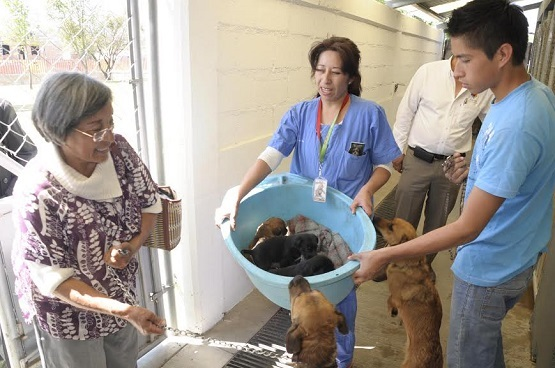 centro adopcion canina:
