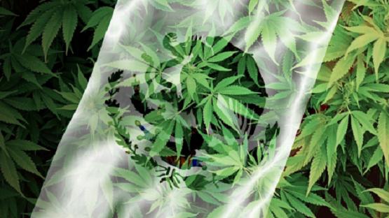 Por Servicio o Negocio, Pero Claro que la Marihuana, se Aprueba