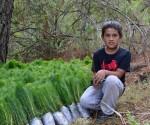 Impulsa COFOM Programa de Plantaciones Comerciales
