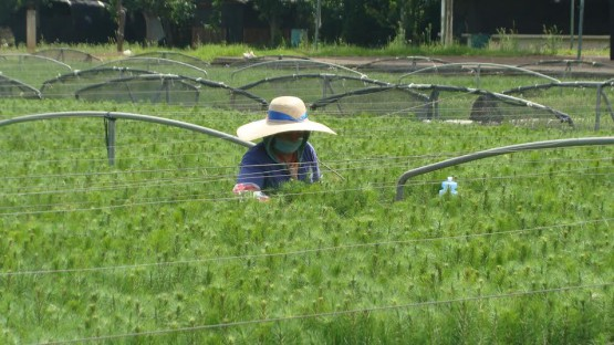 Reconocerán Acciones Destacadas a Favor del Sector Forestal