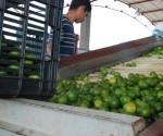 A la Alza Precio del Limón; a la Baja la Producción