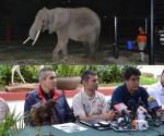 Llega al Zoológico de Morelia un Ejemplar Hembra de Elefante Africano