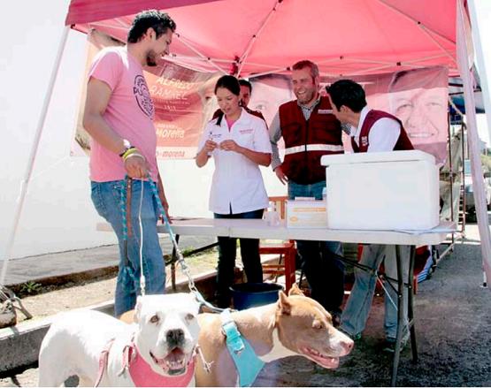 Se Manifiesta Alfredo Ramírez por un Trato Digno a los Animales en Morelia