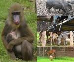 """Nacieron 98 Ejemplares en el 2014 en el Parque Zoológico """"Benito Juárez"""""""