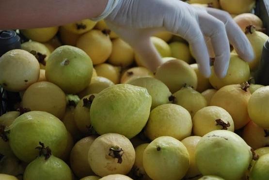 Conserva Michoacán Liderazgo en Valor de Producción Agrícola