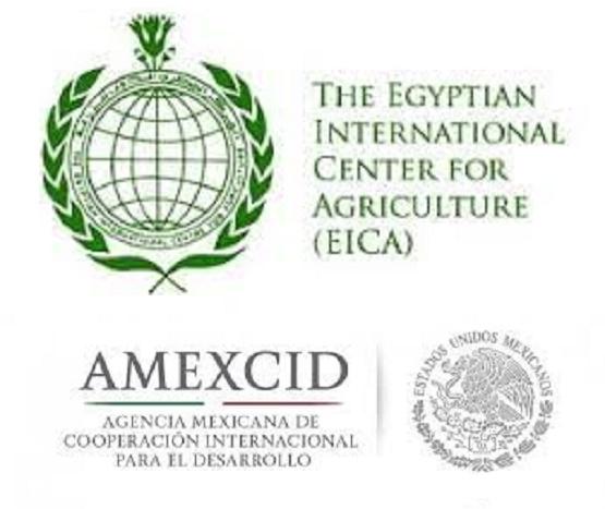 Becas en Egipto Para Cursos Sobre Agricultura