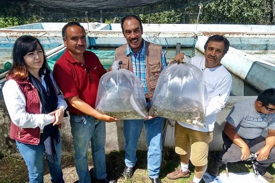 Entrega Sagarpa 10 mil Ejemplares de Carpa Tata a Hidalgo