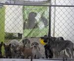 Buen Trato a las Mascotas y Vacunación a Tiempo es una Responsabilidad