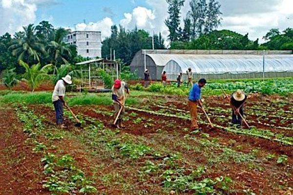 Si la Agricultura Fuera Negocio, los Trabajadores Fueran Bien Pagados