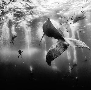 México Gana Concruso de Fotografía de National Geographic