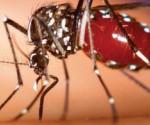 Se Incrementan Casos de Chikungunya; Focos Rojos en Apatzingán y LC