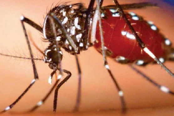 Acciones contundentes de la SSM contra dengue, chikungunya y zika