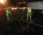 Ayuntamiento de Morelia Continúa con el Derribo de Árboles que Representan Riesgo