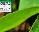 Organiza Facultad de Biología Concurso de Fotografía
