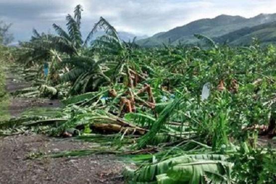 Dejó Patricia Afectación en 4 mil Hectáreas de Cultivo de Plátano