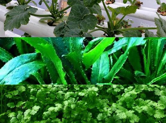 Encuentro Nacional de Agricultura Biodinámica