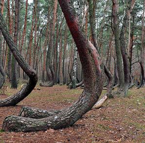 Bosque Chueco