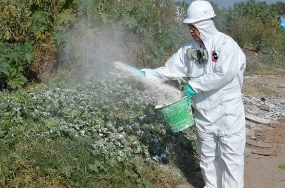 Refuerza Ayuntamiento de Morelia Acciones Contra Chikungunya
