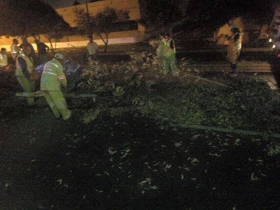 Llama Ayuntamiento de Morelia a Reportar Árboles en mal Estado