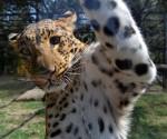 Zoológico Benito Juárez Cierra el año con 179 Nacimientos