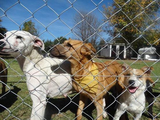 Ayuntamiento de Morelia Reforzará el Cuidado de Vida Animal