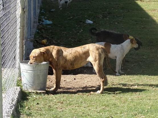Ayuntamiento de Morelia Apoya Iniciativas Ciudadanas en pro de la Esterilización Animal