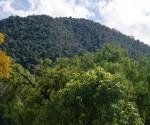 Michoacán Tendrá un Sector Forestal Sustentable y Moderno: COFOM