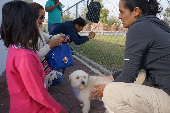 Realiza Ayuntamiento Segunda Feria de Adopción