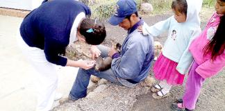 Jornada-Vacuanacion-Perros