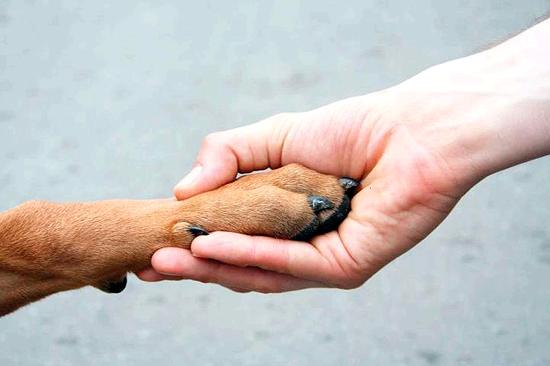 Adopción Animal