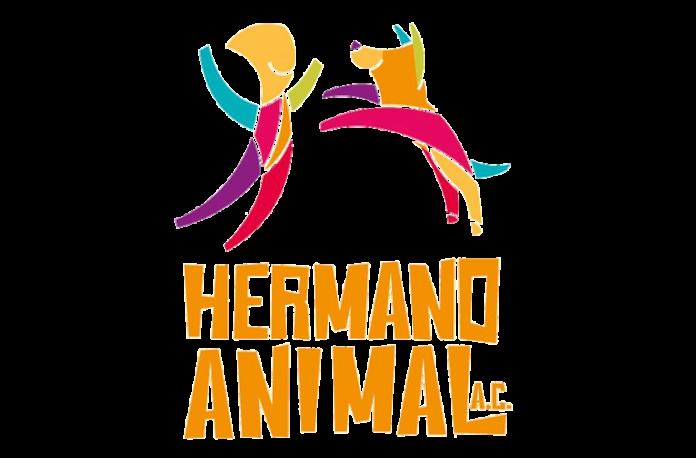 Hermano-Animal